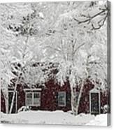White Snow Covered Birches Canvas Print