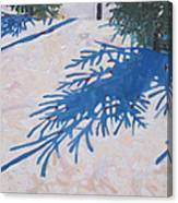 White Spruce Canvas Print