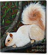 White Squirrel Of Sooke Canvas Print