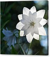 White Star Canvas Print
