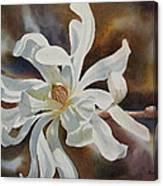 White Star Magnolia Blossom Canvas Print
