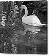 White Swan In Black And White II Canvas Print