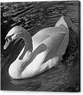 White Swan In Black And White Canvas Print
