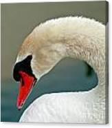 White Swan Profile Canvas Print