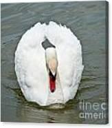 White Swan Swimming Canvas Print