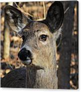 White Tailed Deer 1 Canvas Print