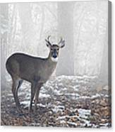White Tailed Deer Buck In The Mist Canvas Print