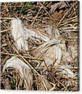White-tailed Deer Hair Canvas Print