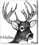 White-tailed Deer Head Canvas Print
