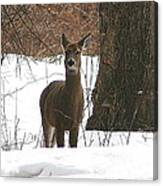 White-tailed Winter Stand  Canvas Print