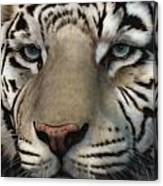 White Tiger - Up Close And Personal Canvas Print