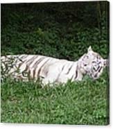 White Tiger 2 Canvas Print