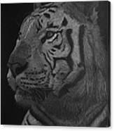 White Tiger At Night Canvas Print