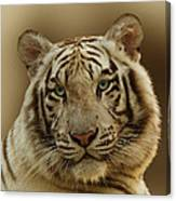 White Tiger II Canvas Print