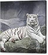 White Tiger On A Rock  Canvas Print