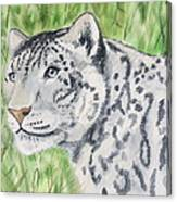 White Tiger Too Canvas Print