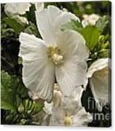 White Tree Flower Canvas Print