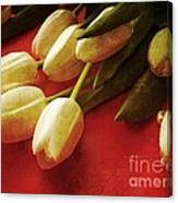 White Tulips Over Red Canvas Print