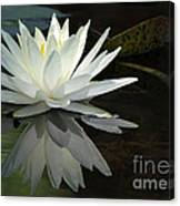 White Water Lily Reflections Canvas Print