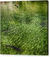White Water Preserve Canvas Print