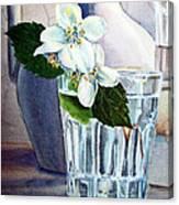 White White Jasmine  Canvas Print
