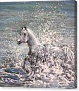 White Wild Horse Canvas Print
