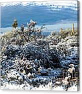 White Winter In The Desert Of Tucson Arizona Canvas Print