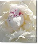 White With Red Peony Canvas Print