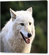 White Wolf Pant Canvas Print