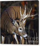 White-tailed Deer Antler Shadow Canvas Print