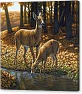 Whitetail Deer - Autumn Innocence 1 Canvas Print