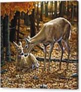Whitetail Deer - Autumn Innocence 2 Canvas Print