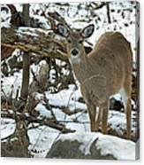 Whitetail Deer Doe In Snow Canvas Print
