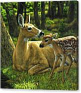 Whitetail Deer - First Spring Canvas Print