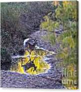 Whitetail Deer Mirrored Canvas Print