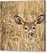 Whitetail In Weeds Canvas Print