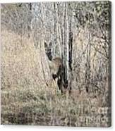 Whitetail Undercover Canvas Print