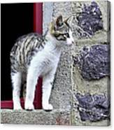 Who Goes There - Kitten Canvas Print