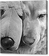 Who Has The Biggest Nose Golden Retriever Dog  Canvas Print