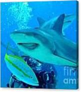 Who Said Sharks Were Mean Canvas Print