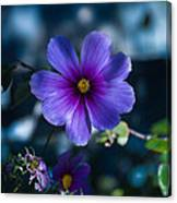 Who You Calling A Pansy? Canvas Print