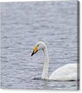 Whooper Canvas Print