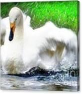 Whooper Swan Flutter Canvas Print