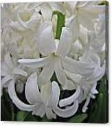Whte Hyacinth Canvas Print
