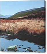Wicklow Bogscape Canvas Print