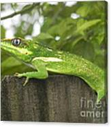 Wild About You Canvas Print