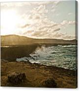 Wild Aruba Canvas Print