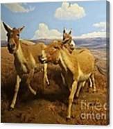 Wild Asses Canvas Print