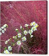 Wild Asters And Muhly Grass Canvas Print