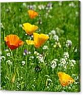 Poppies 3 - Wild At Heart Canvas Print
